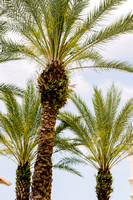 20150411_Wedding_AndrewsBueno_0001