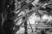 BW_20140709_Session_Zarate_0014