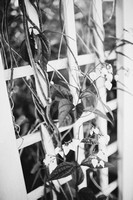 BW_20140425_Wedding_DunkleAmalino_0013
